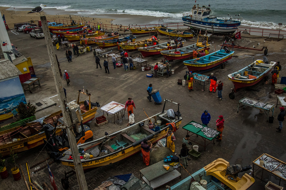 VALPARAISO, CHILE - MARCH 17, 2014: At Caleta Portales, Valparaiso's main fishing port, artisanal fishers sell their morning's catch on small tables next to their boats at the port in Valparaiso, Chile. This is on tiny slice of the country's massive seafood industry, the sixth largest in the world.