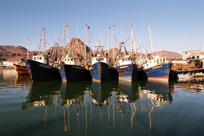 Shrimp fishing fleet in Mexico