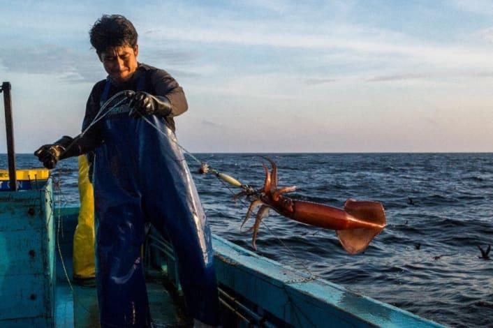 Fisherman in Peru reels in jumbo squid
