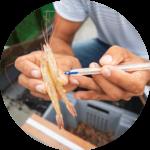 A Fisheries Observer analyzes fish bycatch on the Pomada Shrimp Fishing boat, Posorja, Ecuador