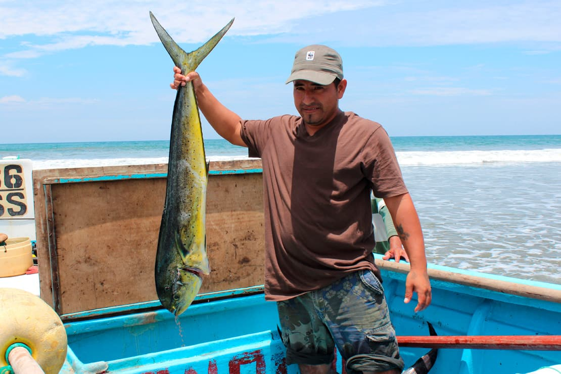 An artisanal fisherman holds up a Mahi Mahi fish, Ecuador