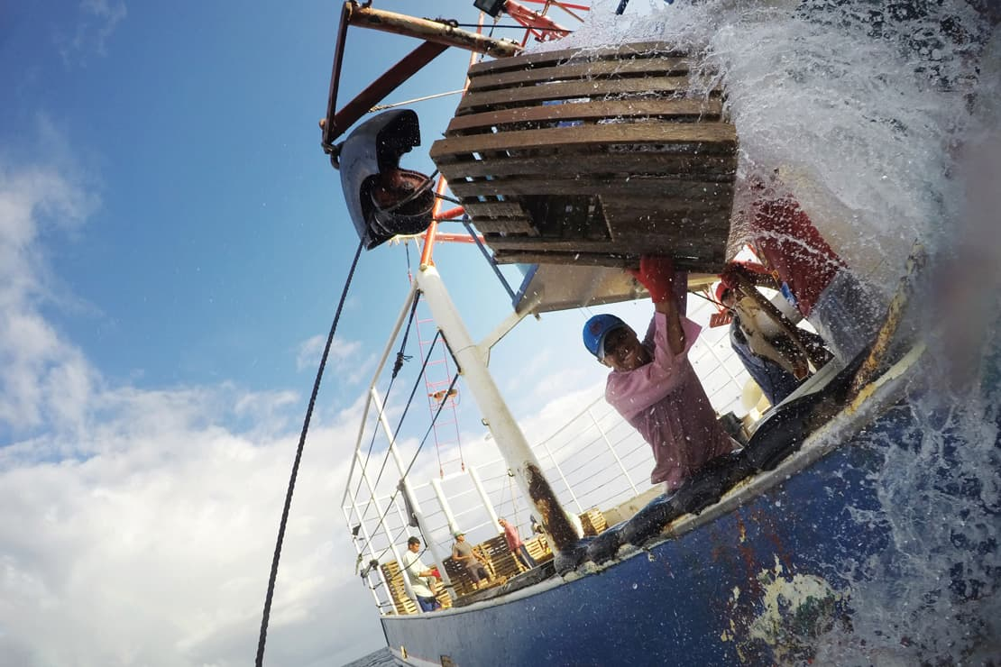 A fisherman pulls a trap from a lobster fishing boat off the coast of Honduras