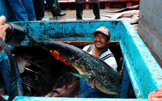 The mahi mahi fishery is a significant piece of Ecuador's economy and means jobs for more than 8; 000 fishers. Keeping fish stocks healthy is key to their way of life.