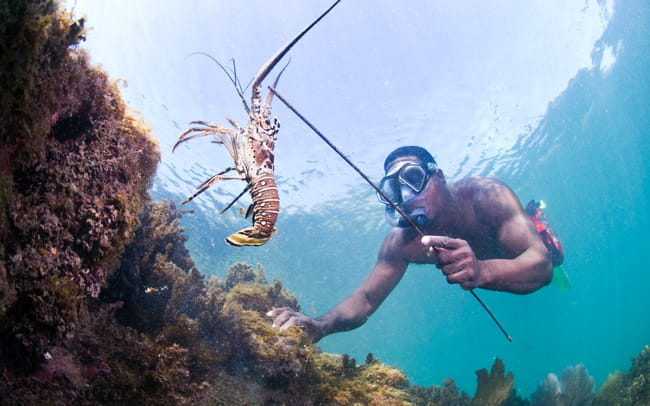 A fisherman and East End community leader, fishing lobster in East End, Cayos Cochinos, Honduras, Central America