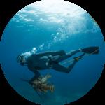 Lobsterman Bruno Underwood swims underwater holding two lobsters, Spanish Wells, Bahamas